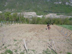 DP G Berlioz plantation